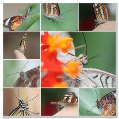 Die andere Sicht der Dinge - Schmetterlingsgesichter