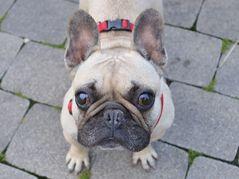 Die anderen Hunde haben gesagt, ich sei hässlich... schnief