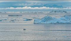 die arktische eiswelt