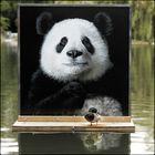 Die ART Ente