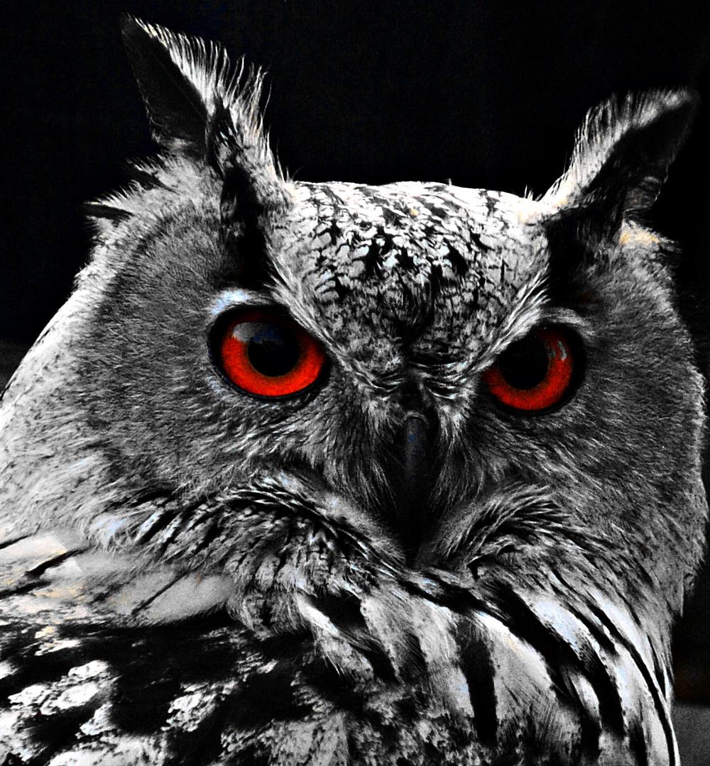 Die Augen der Eule