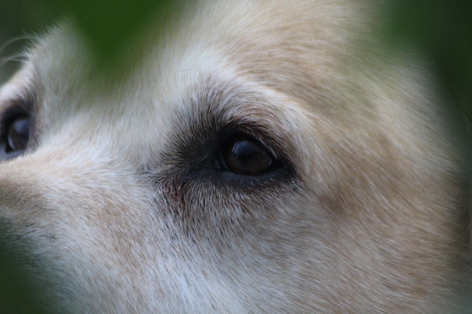...die Augen, die mir grenzenlos vertrauen...