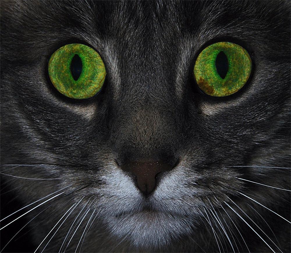 Die Augen einer Katze