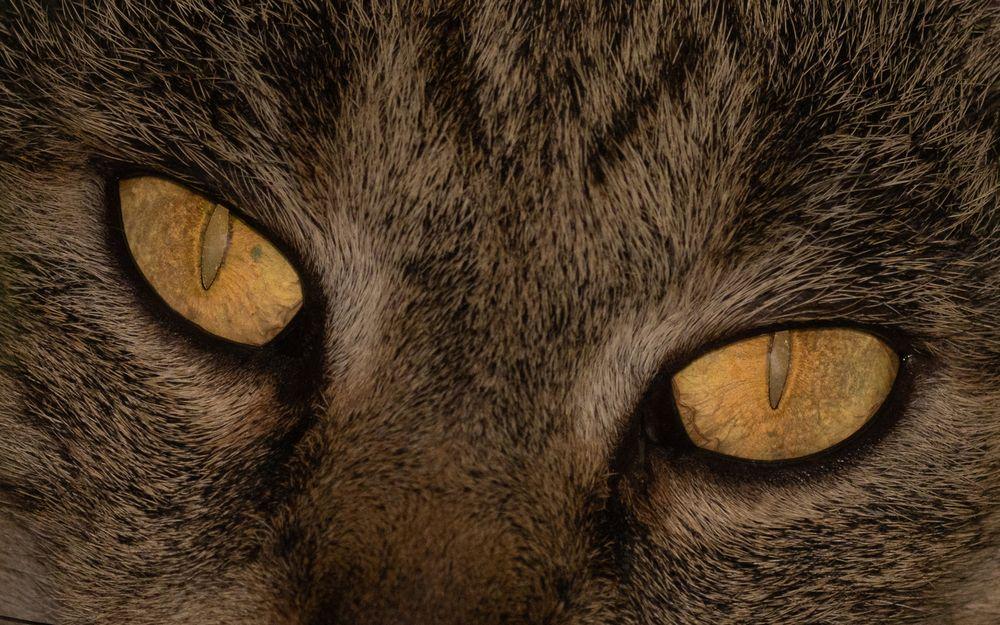°°°Die Augen eines Jägers°°°