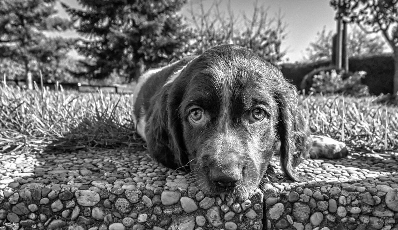 die Augen meines Hundes