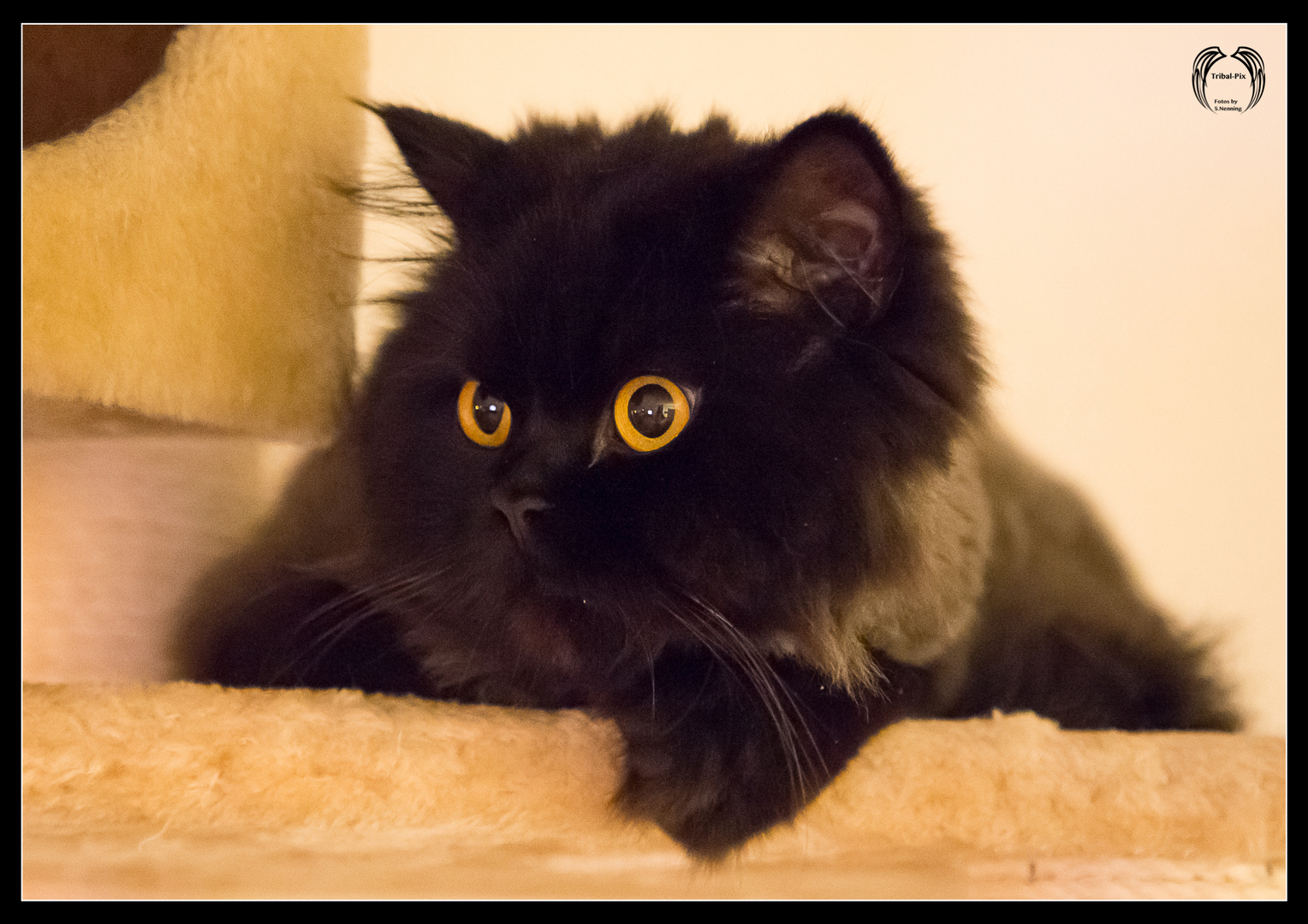 Die Augen sind das Tor zur Seele...