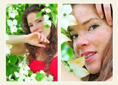 die aus China gebürtige weißblühende Schönheit Cornus kousa
