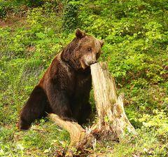 Die Bären sind los