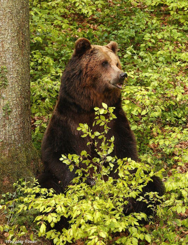 Die Bären sind los..........-II-