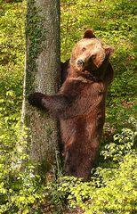 Die Bären sind los.........III