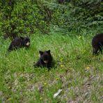 Die Bärenbande