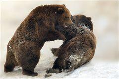 Die Bärenschlacht [26] ...