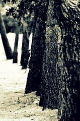 Die Bäume am Weg