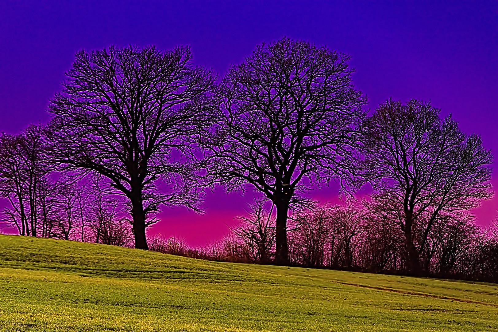 die bäume der entscheidung