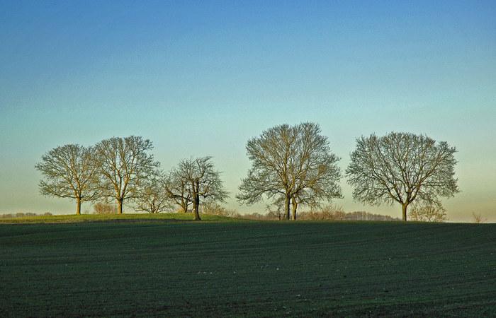 Die Bäume in der Ferne....