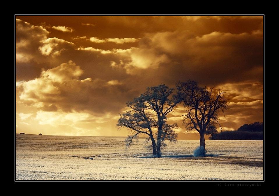 "Die Bäume in ""farbe"""