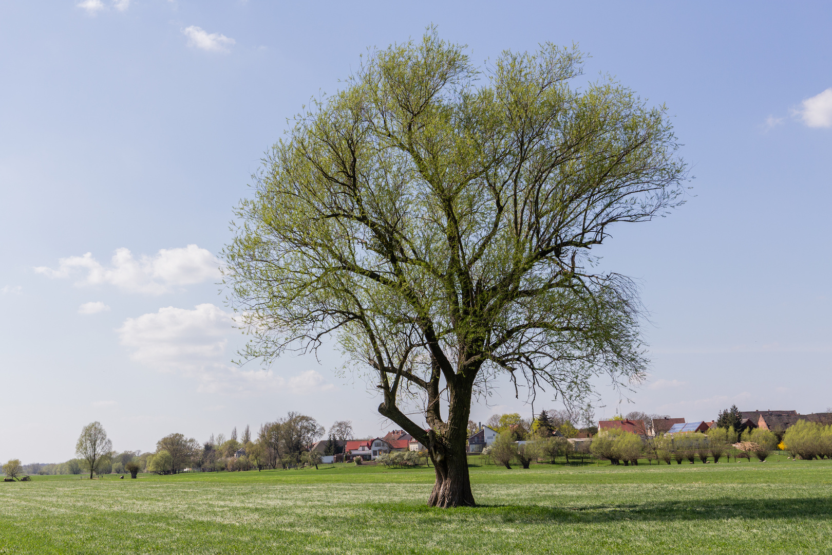 Die Bäume schlagen aus