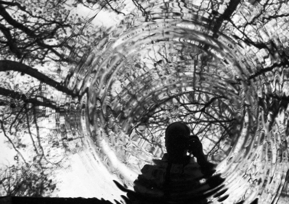 Die Bäume wachsen mir über den Kopf oder der Blick in die Röhre