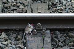 Die Bahn kommt