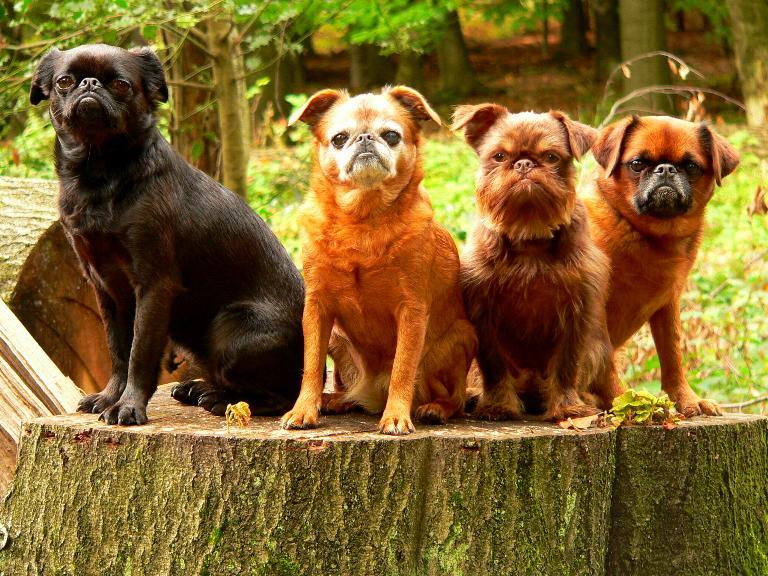 Die Bande des Schreckens :)