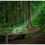 Die Bank im Walde