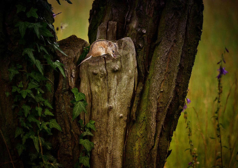 Die Baumflüsterin...