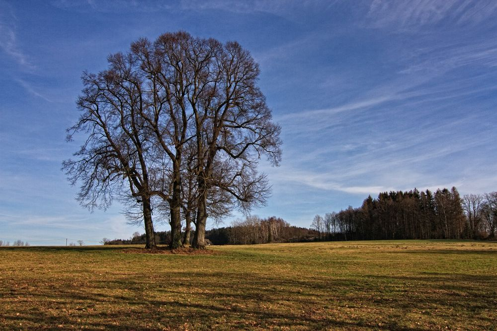 Die Baumgruppe 02