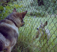 Die Begegnung am Zaun