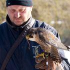 Die Belohnung des Falken (1)