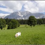 Die Berge, die Almwiese und der dicke Hund
