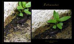 """""""Die Besucher - Salamander"""""""