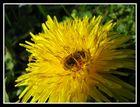 ```````Die Biene ´´´´´´´´´´2``