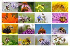 die Biene an verschiedenen Blüten
