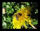 `````` Die Biene ´´´´´´´´´