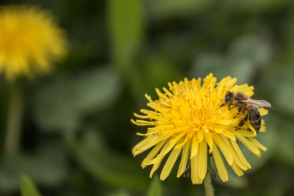 Die Biene und die Widerhaken