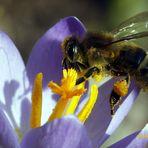 .... die Bienen sind wieder da