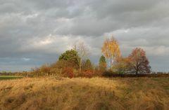 Die Birke auf dem Höfelland - in memoriam Anke Junk