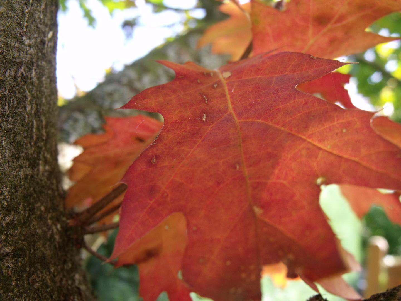 Die Blätter färben sich,es ist so weit der Herbst ist da. Foto ...