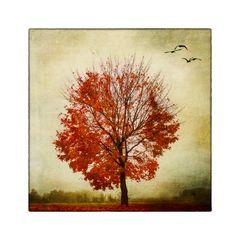 die Blätter fallen leise