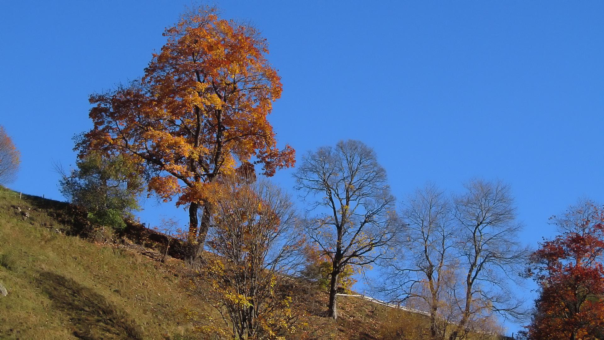 Die Blätter fallen schon