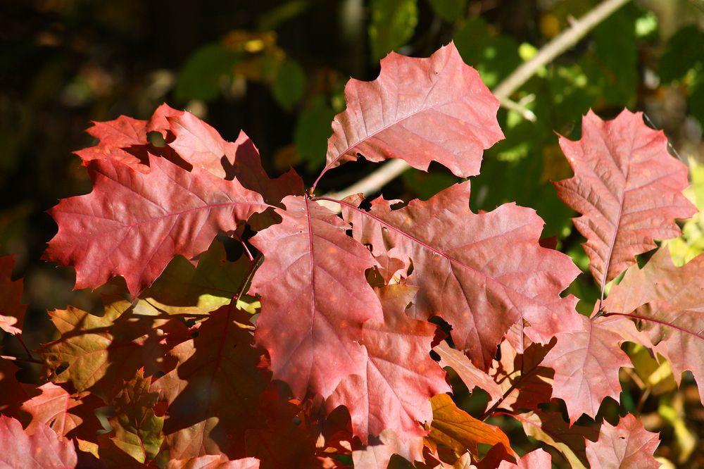 die Blätter werden langsam bunter