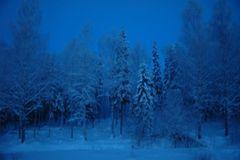 Die blaue Stunde in unserer waldreichen Umgebung