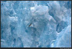 Die blaue Wand des Gletschers...