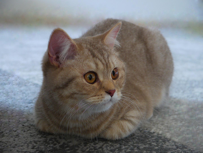 Die Blicke einer Katze