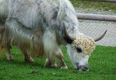 Die Blondine vom Zoo