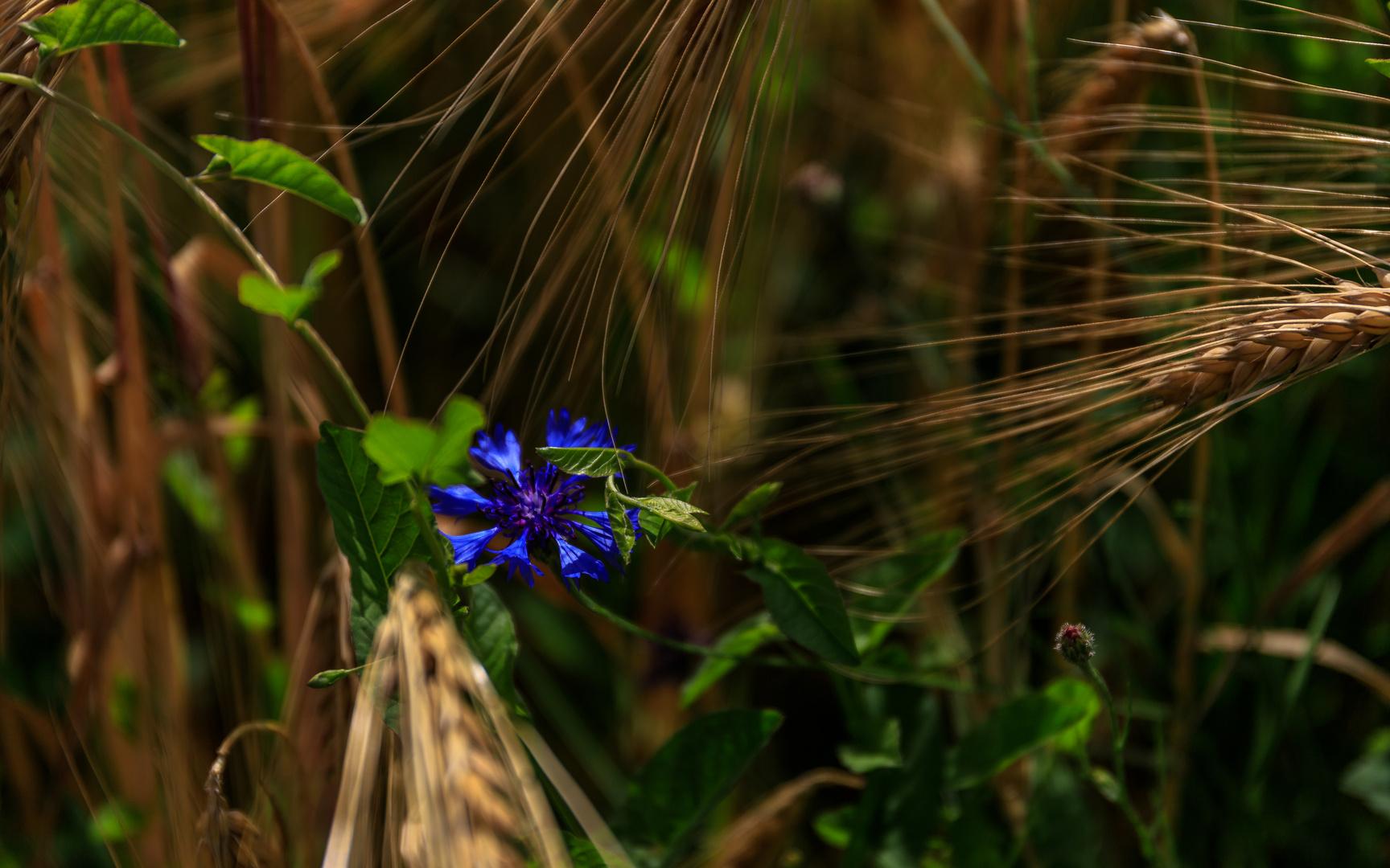 Die Blüte