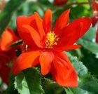 Die Blüte ist das Lächeln der Pflanze