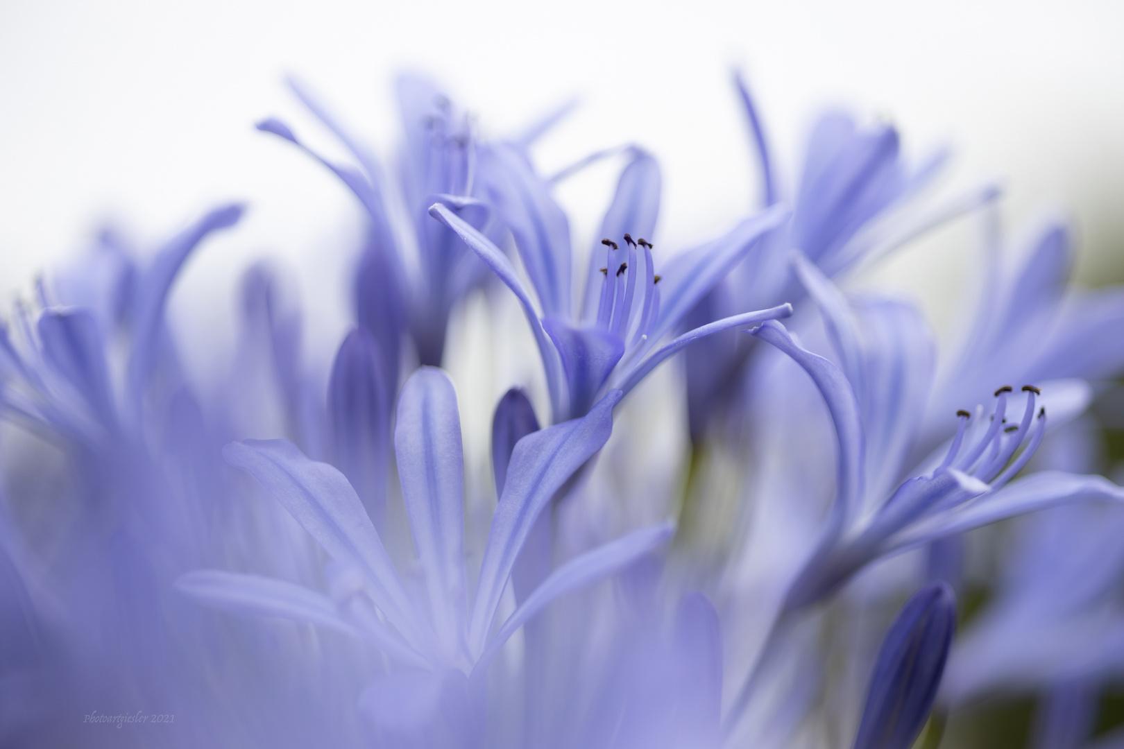 Die Blüte küsst meine Seele