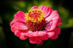 Die Blüte mit den Krönchen