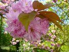 Die Blüten in Nachbars Garten